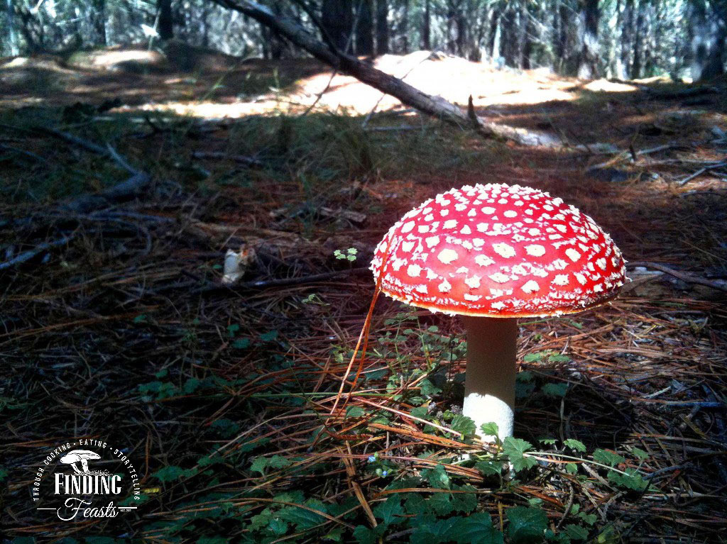 FinSki's Mushrooming in NSW, Oberon, Belanglo