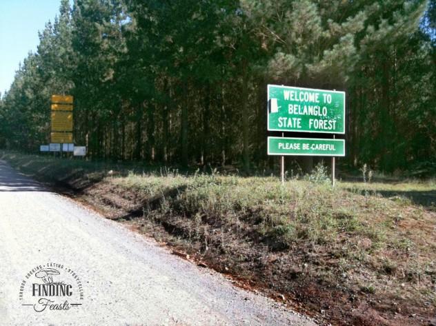 Finding feasts - Mushroom foraging NSW