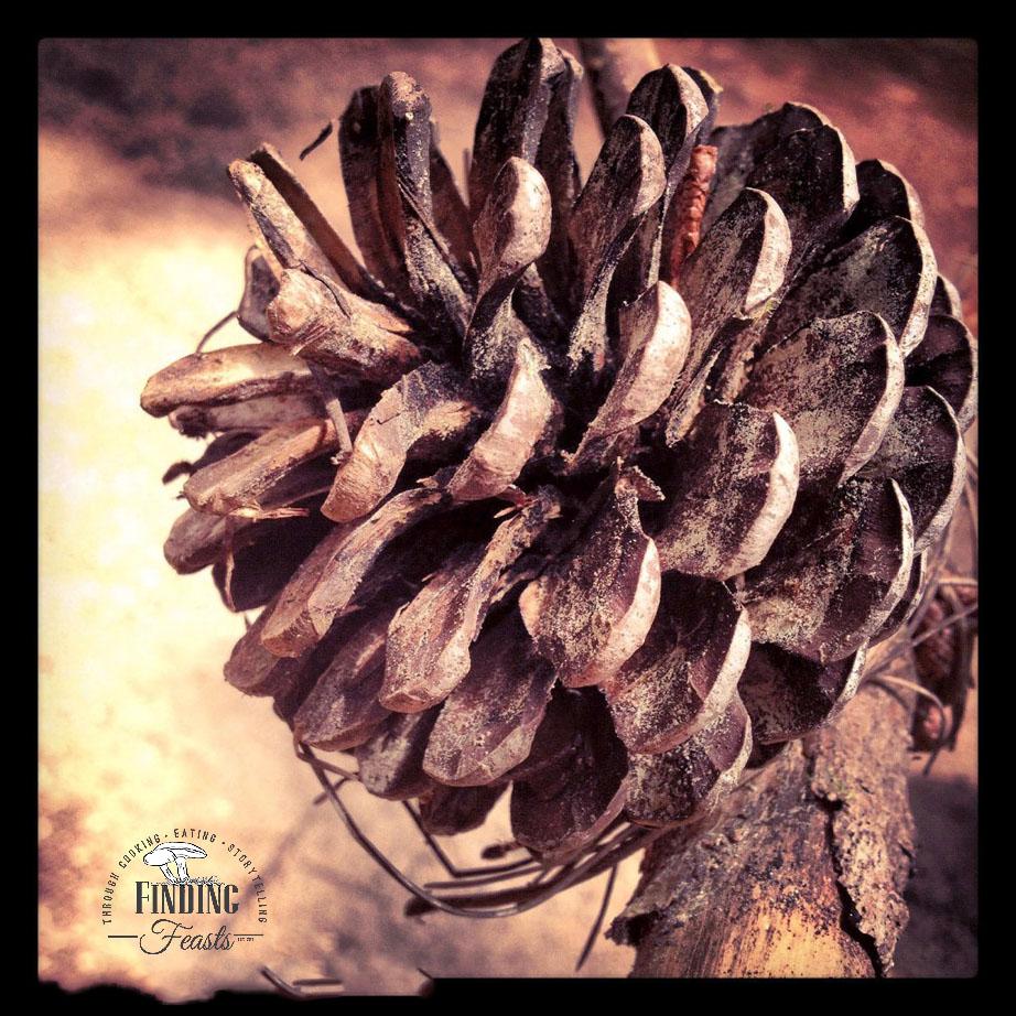 FinSkis Pine Cone
