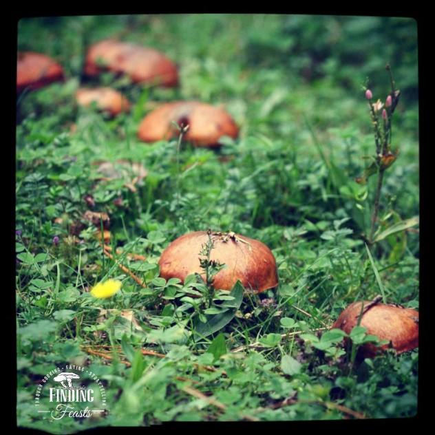 Mushroom foraging NSW
