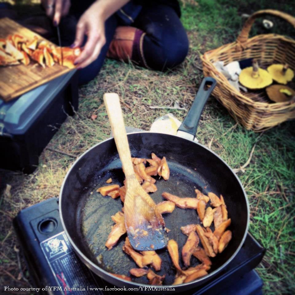 Blondie cooking up some saffron milk cap mushrooms