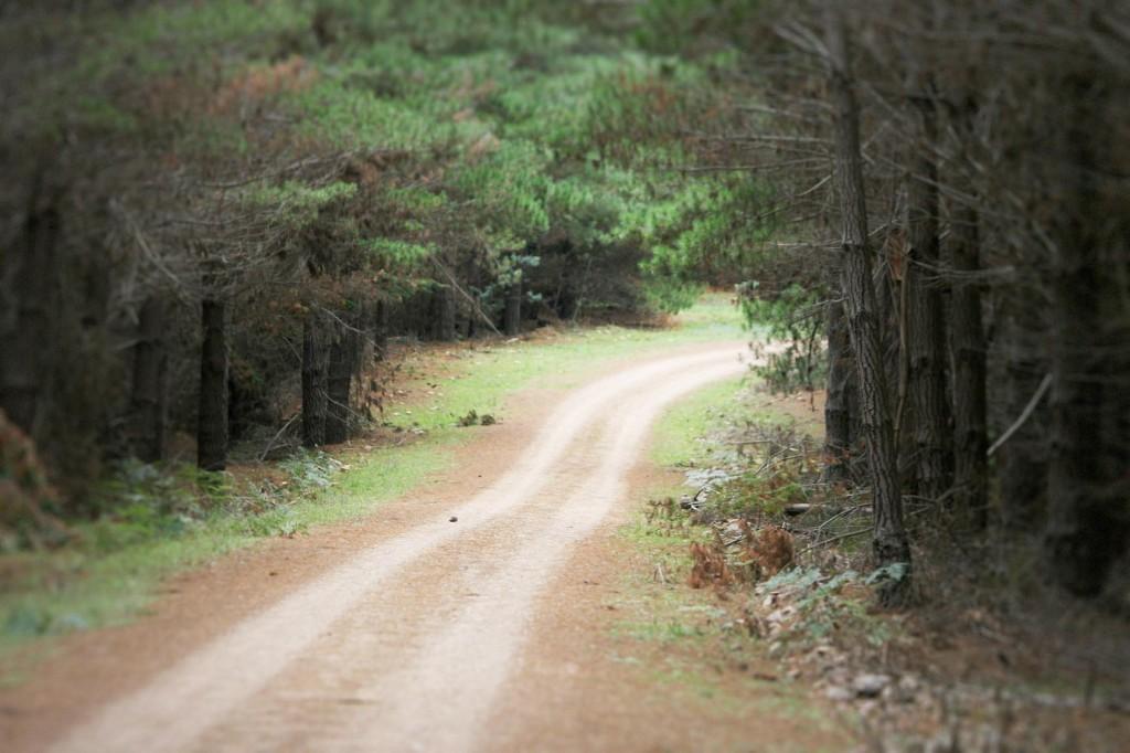 Filming Mushroom foraging NSW