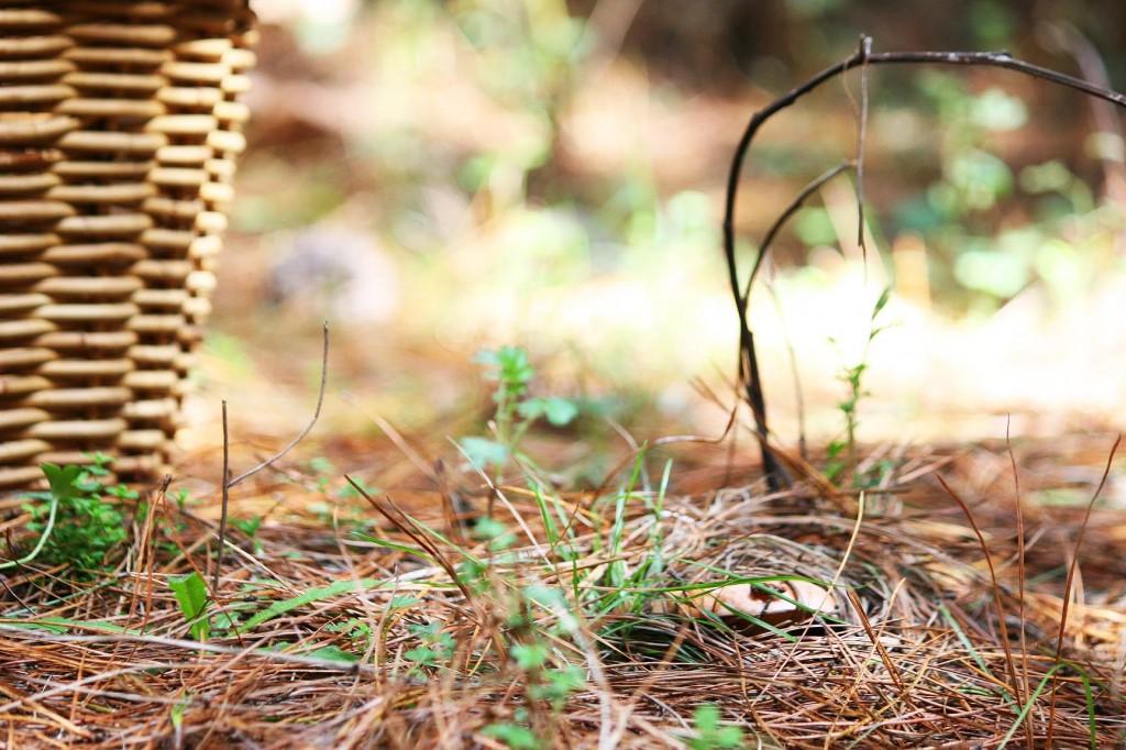 Mushroom picking in Oberon NSW