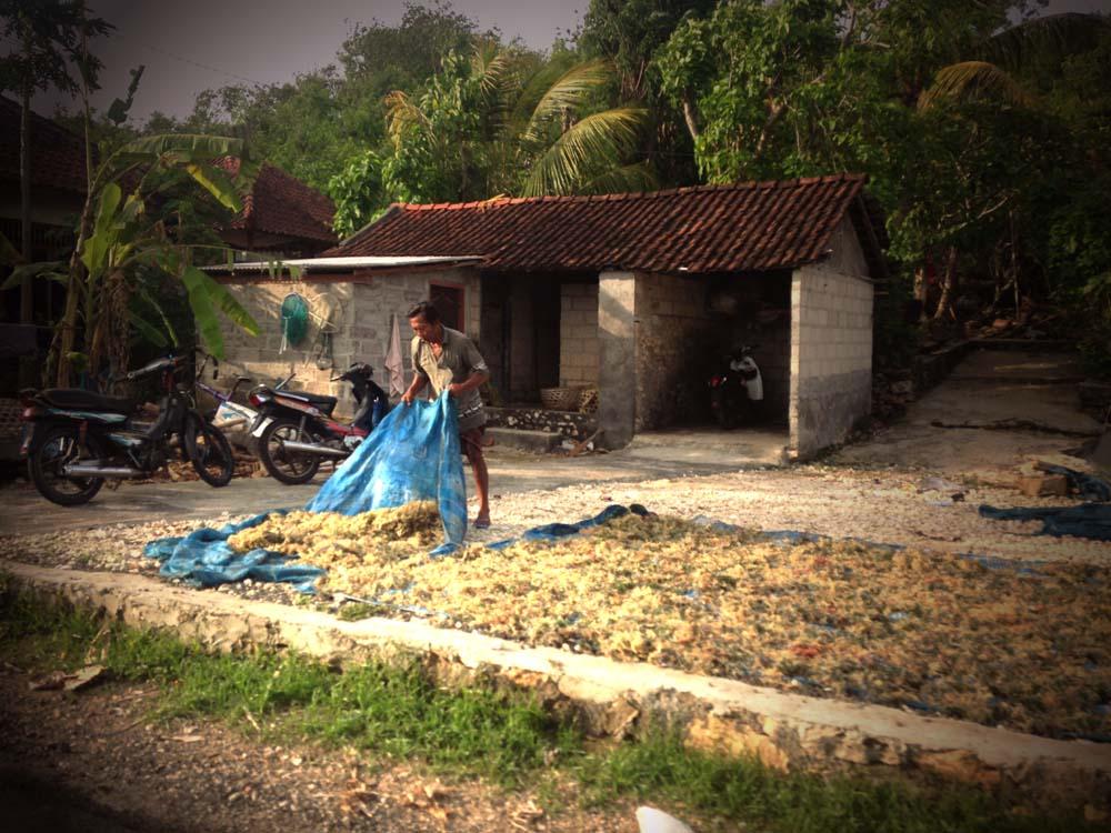 Nusa Lembongan Dried Seaweed