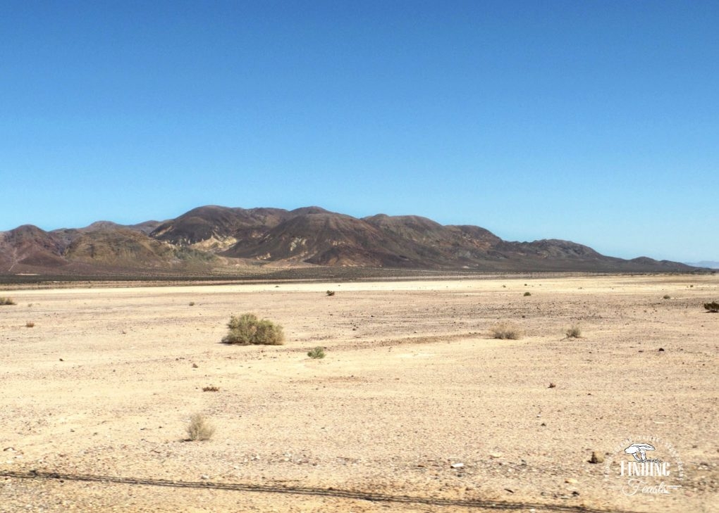 Finding Feasts - Calico Salt Flats